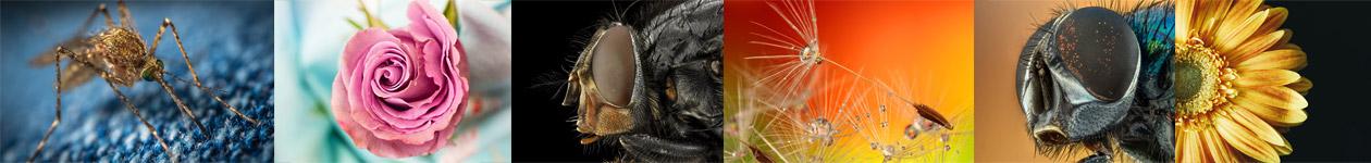 International Macro Photography Contest