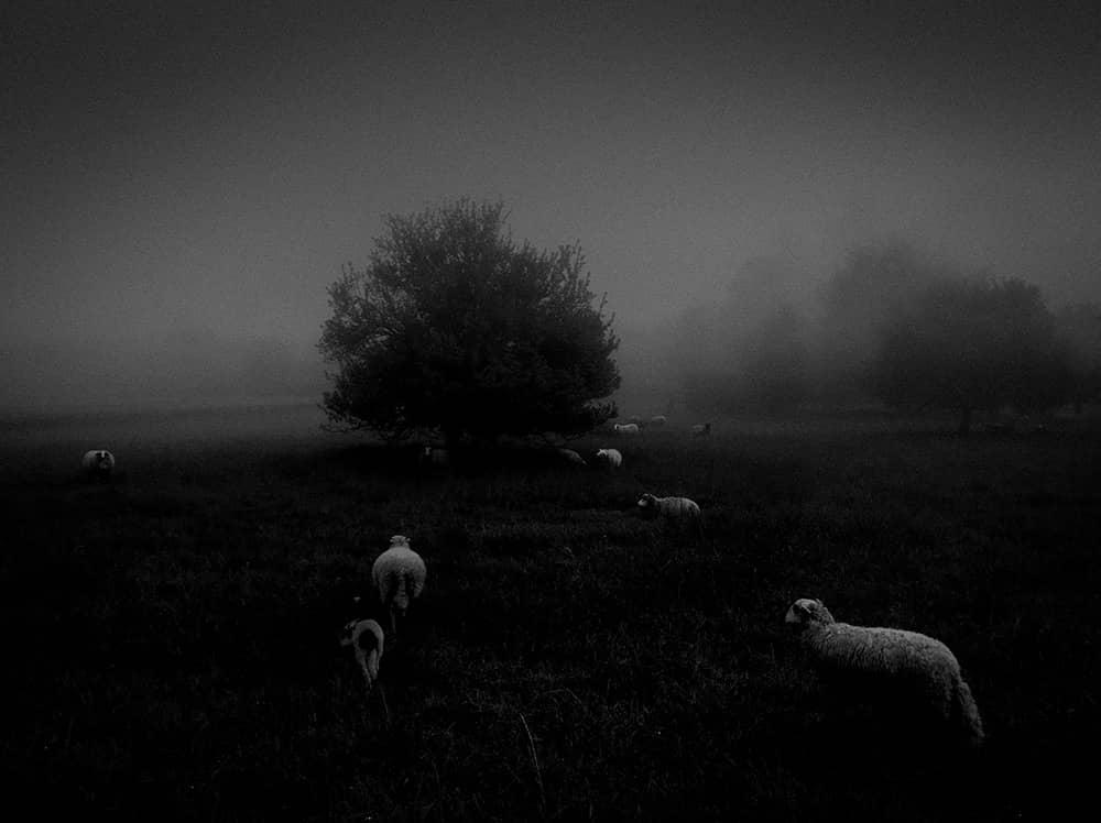 Morning Fog, © Sukru Mehmet Omur, France, 1st Place – Nature, IPPAWARDS - iPhone Photography Awards