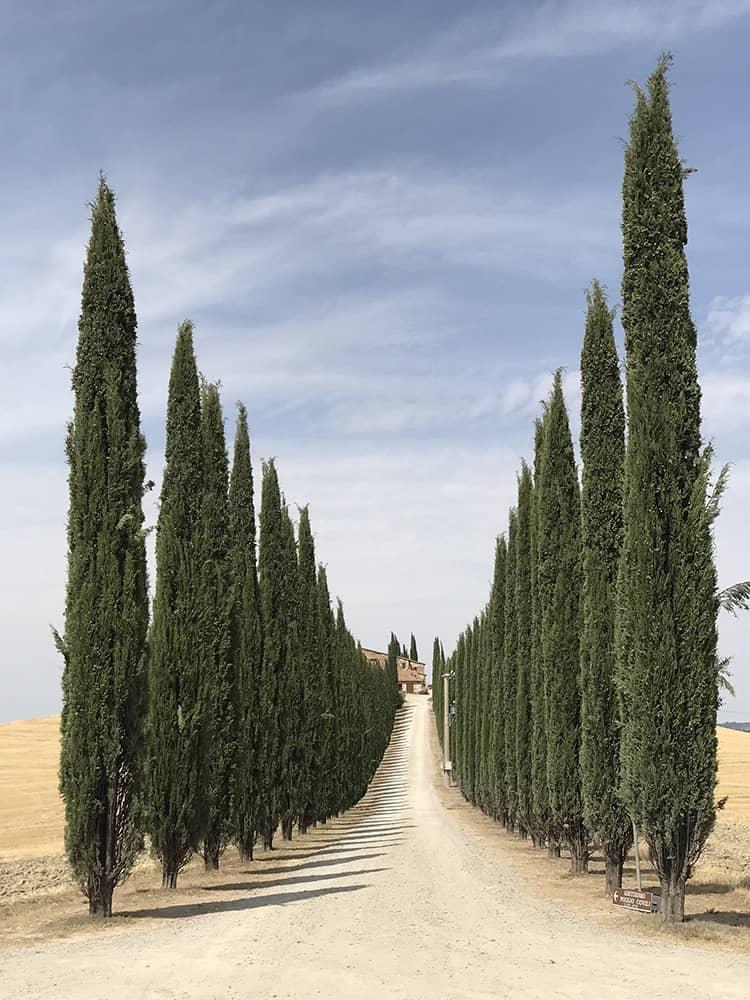 Road of Tuscany, © Lidia Muntean, Romania, 1st Place – Trees, IPPAWARDS - iPhone Photography Awards