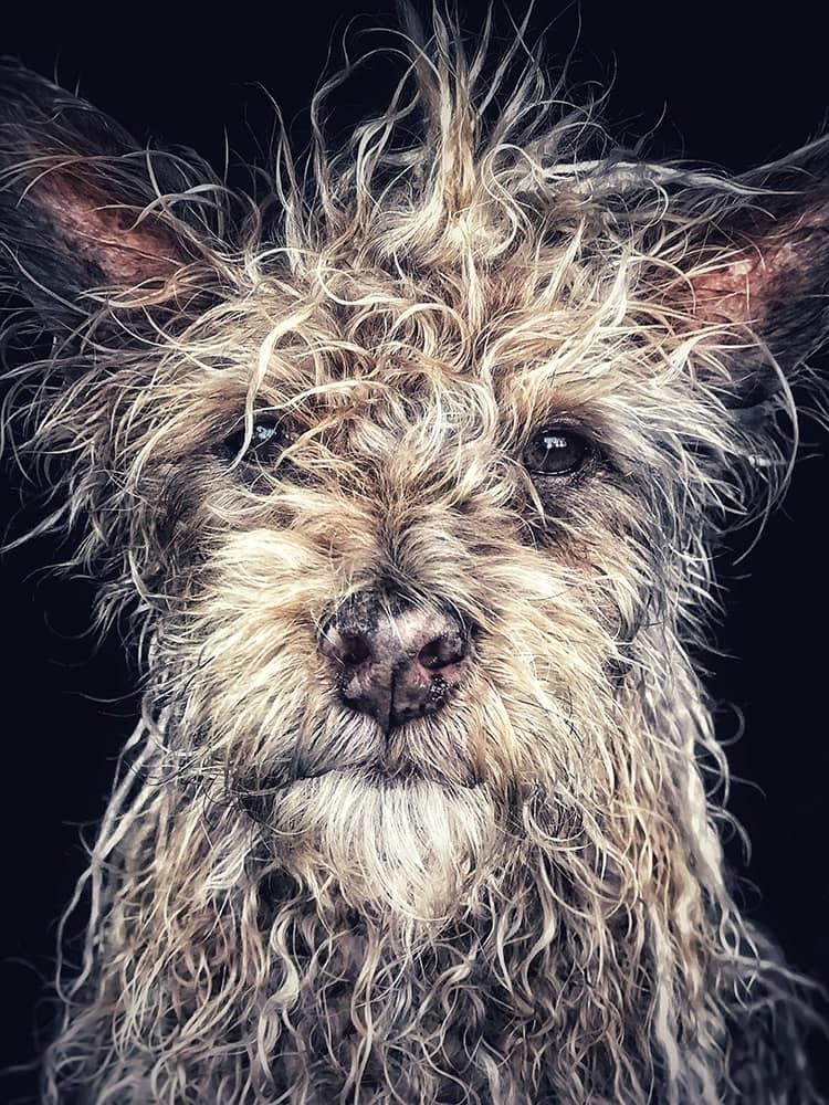 """Django"" Old man baby dog, © Robin Robertis, United States, 1st Place – Animals, IPPAWARDS - iPhone Photography Awards"
