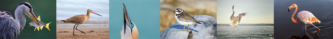 It's a Shore Thing Photo Contest - KingBirder