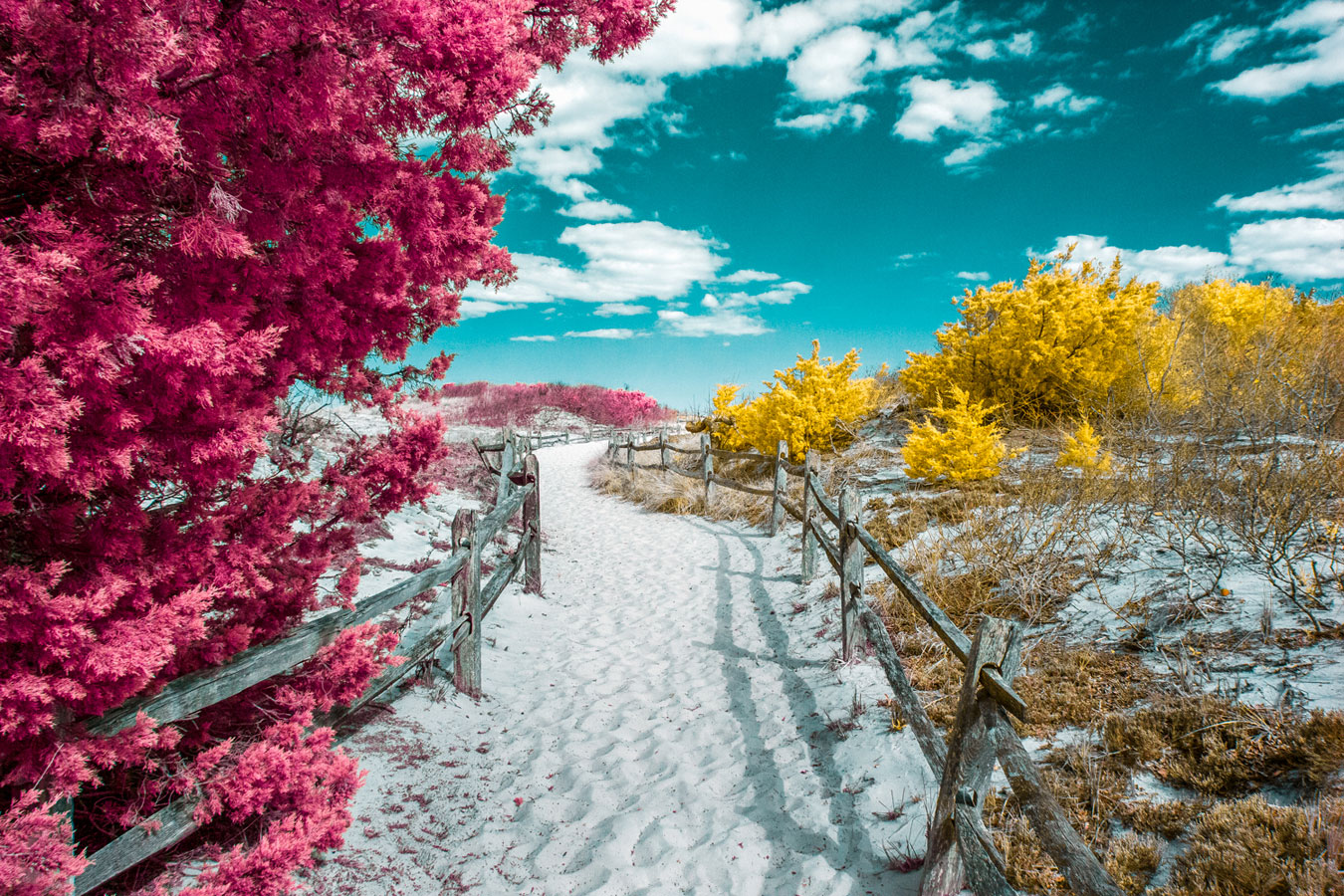 © David Nilsen, Life in Another Light Infrared Photography Contest