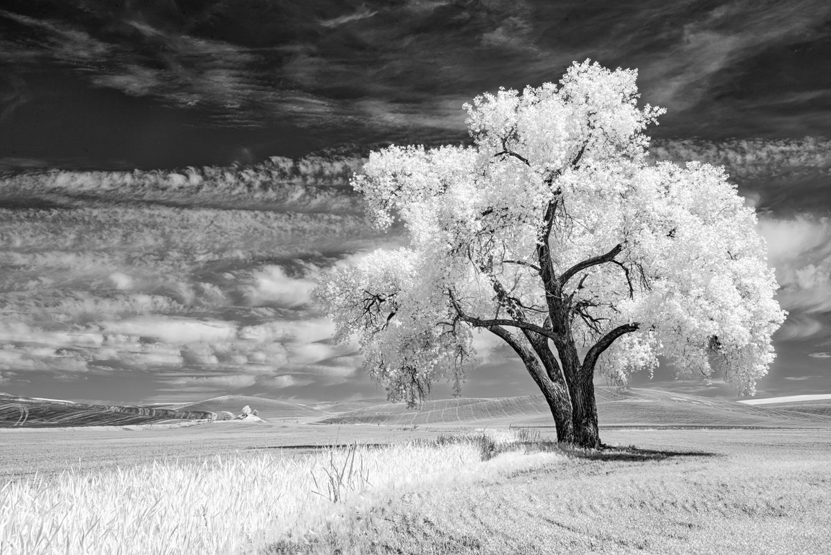 © Penelope Taylor, Life in Another Light Infrared Photography Contest