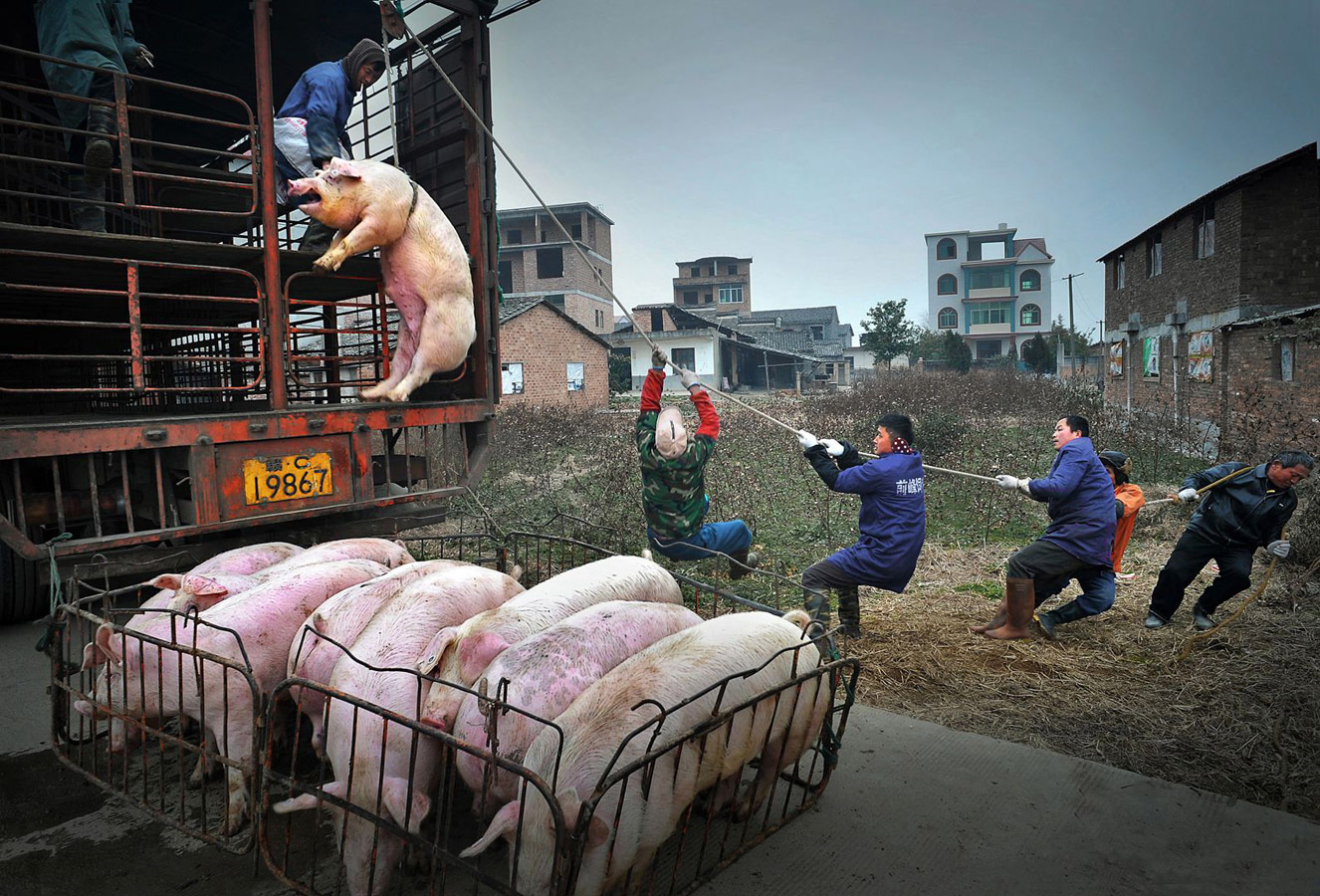 Hanging Pig, © 靖生 Jingsheng 聂 Nie, China, 3rd Place Single, LensCulture Street Photography Awards