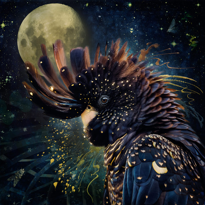Over the Moon (red-tailed black cockatoo), © Judi Lapsley Miller, 2nd Place, Animals Online Art Competition by LightSpaceTime