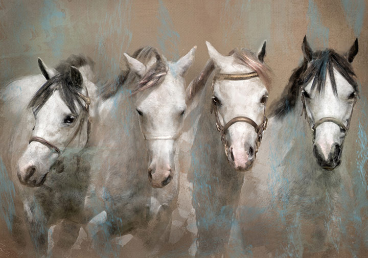 Four Faces, © Kathy Russell, 4th Place, Animals Online Art Competition by LightSpaceTime