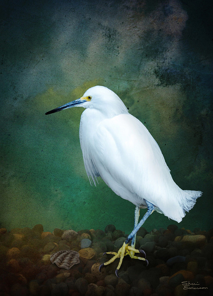 Egret, © Sheri Emerson, 6th Place, Animals Online Art Competition by LightSpaceTime