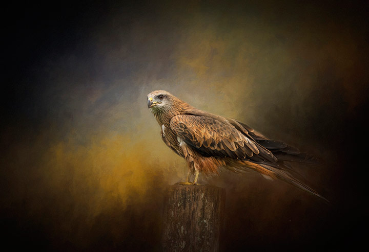 Thinking.....Watching, © Lyn Darlington, 7th Place, Animals Online Art Competition by LightSpaceTime