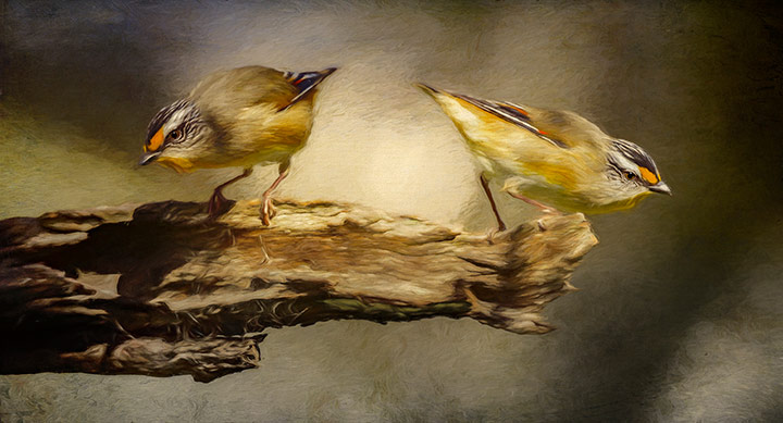 Striated Pardalotes, © Andrew Haysom, 9th Place, Animals Online Art Competition by LightSpaceTime