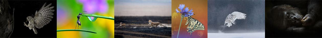 Wildlife and Nature Photo Contest - LuganoPhotoDays