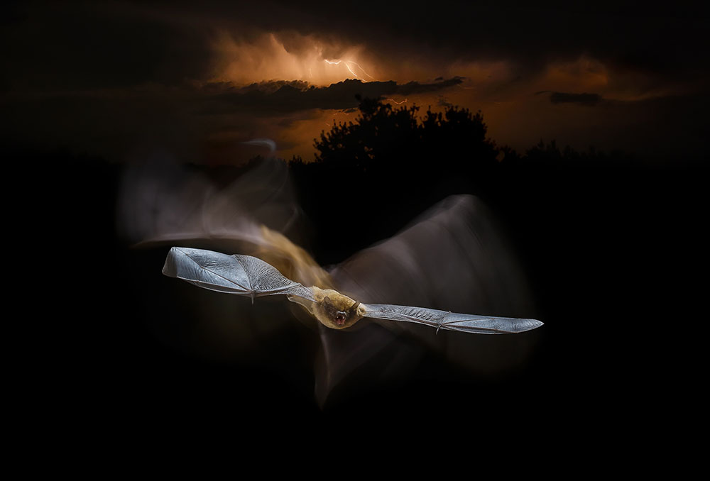 Flying Under The Storm, © Mario Cea Sánchez, Spain, Ganador: Creative Photo, Memorial Maria Luisa Photography Contest