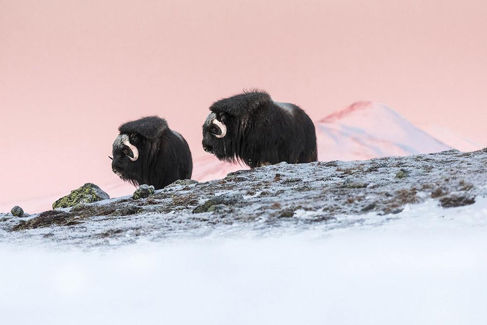 Arctic Sunrise, © Marco Gaiotti, Italy, Nature Winner, Gran Prix Foto Ruano, Memorial Maria Luisa Photography Contest