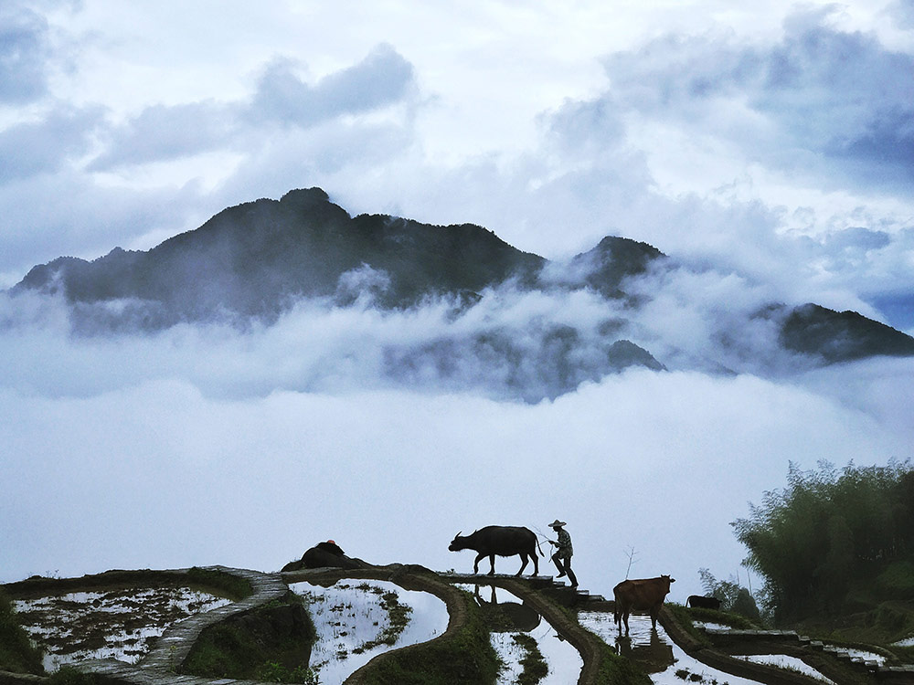 Walking in the Cloud, © Yongmei Wang, 1st Place Nature & Wildlife Winner, Mobile Photography Awards