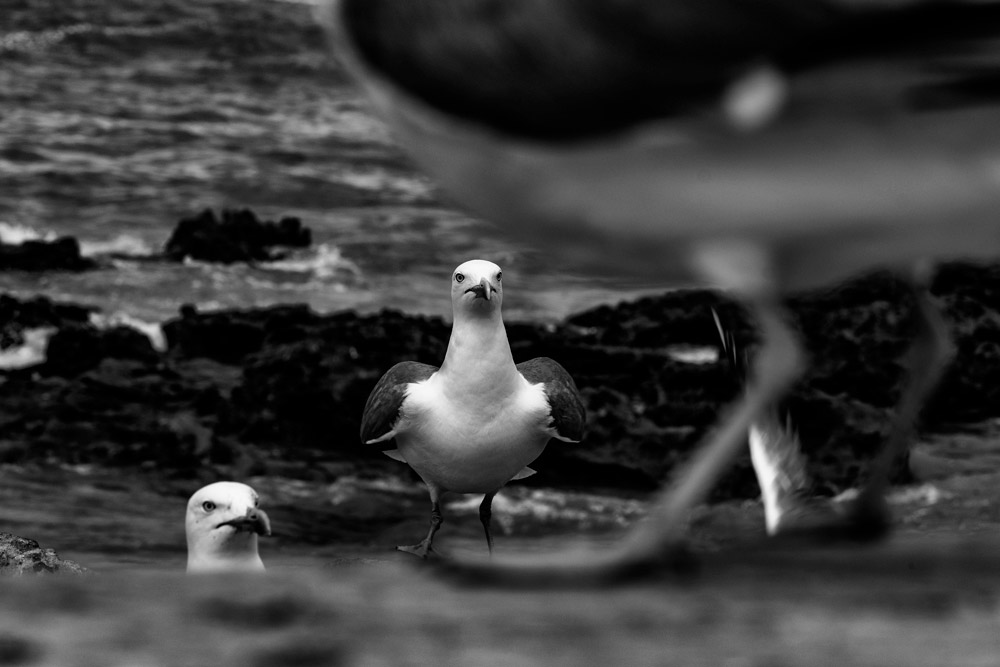Birds, © Lil Steinberg (Israel), 1st Place Winner - Nature Discovery of the Year 2018 (Amateur), Monochrome Photography Awards