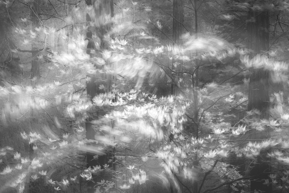 When The Forest Stirs, © Charlotte Gibb (United States), 1st Place Winner - Nature Photographer of the Year 2018 (Professional), Monochrome Photography Awards