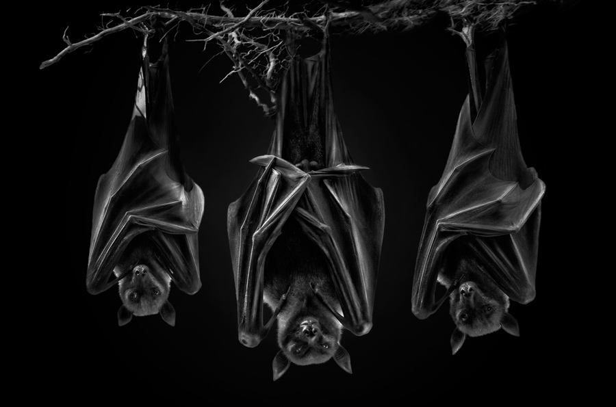 The Sect, © Pedro Jarque, Peru, Wildlife Photographer of the Year 2017, Monochrome Photography Awards