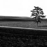 Ippon-One Pine Tree, © Aya Iwasaki, 1st Place - Black & White Landscapes Series of the Year 2018, MonoVisions Photography Awards