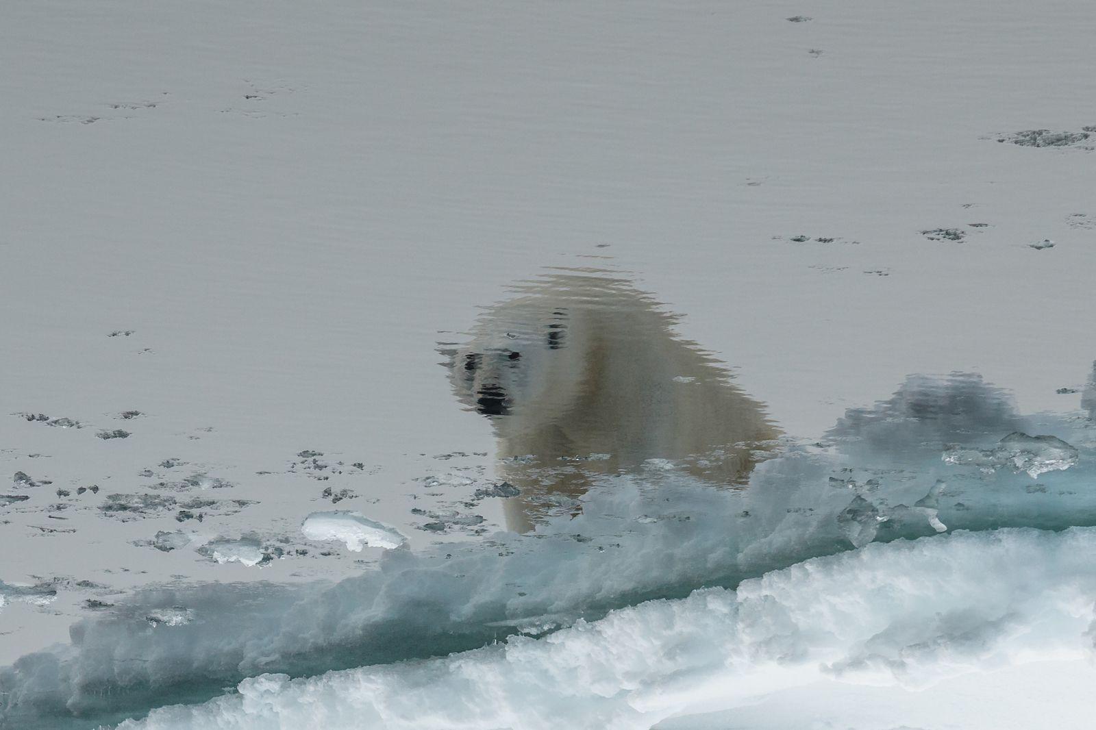 Reflection, © Mikhail Nitishinsky, Wildlife Nomination, Most Beautiful Country Photo Contest