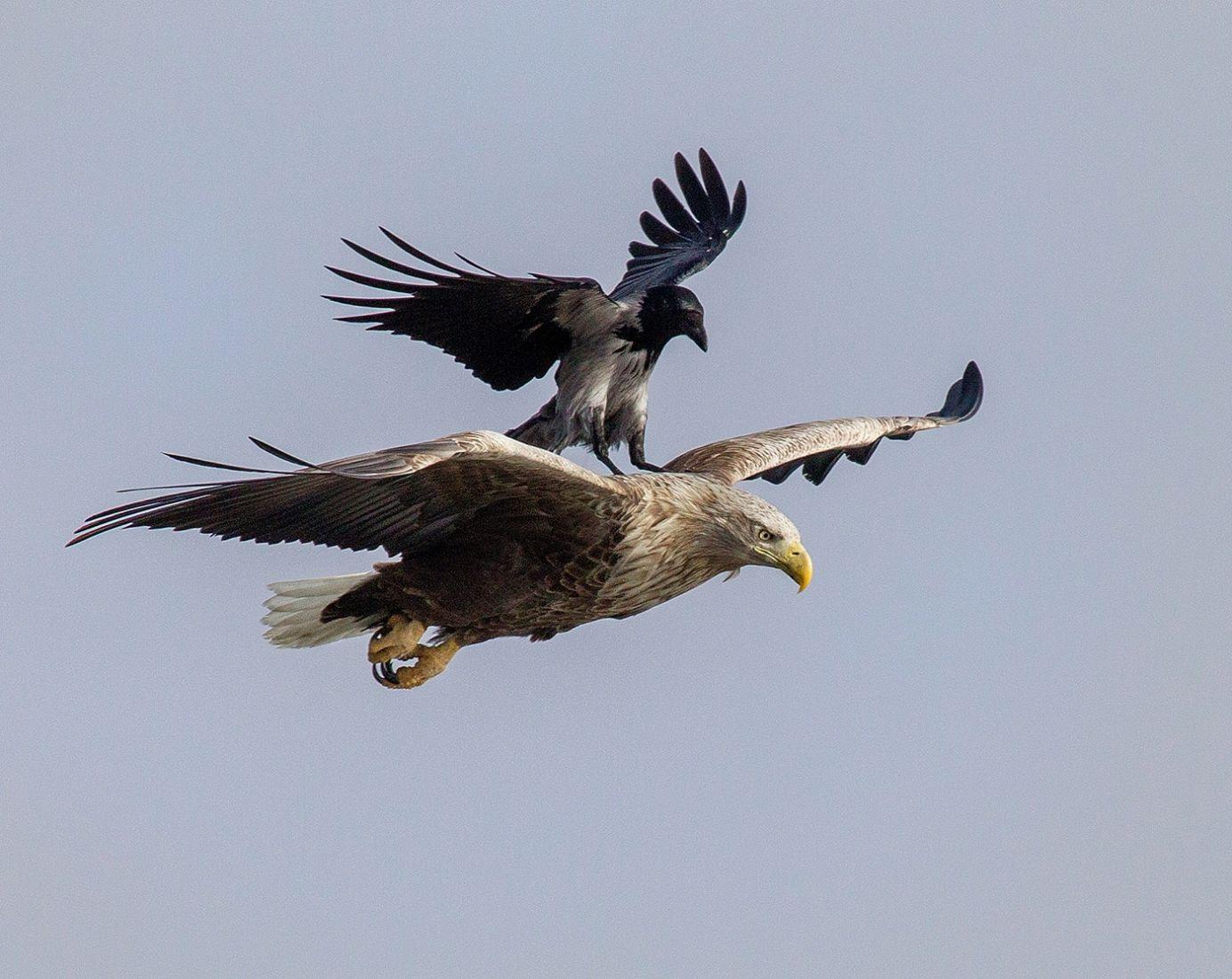Flew, © Oleg Znobishchev, Birds Nomination, Most Beautiful Country Photo Contest