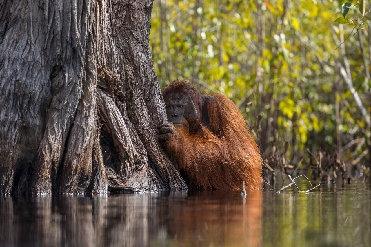 Face To Face In A River In Borneo, © Jayaprakash Joghee Bojan, Grand Prize, National Geographic Nature Photographer of the Year Contest