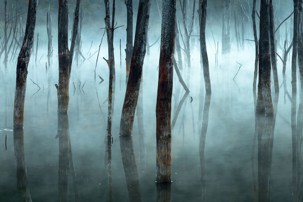 Cold And Misty, © Gheorghe Popa, Honorable Mention, Landscapes, National Geographic Nature Photographer of the Year Contest