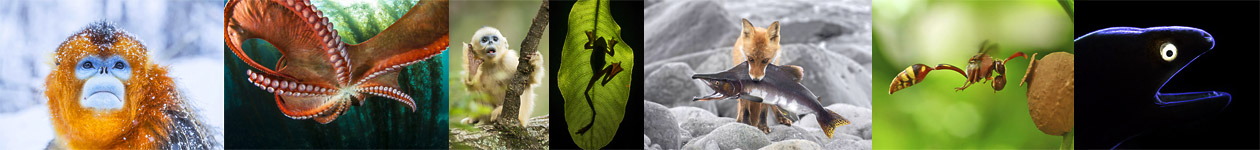 Nature's Best Photography Asia 2017 Winners