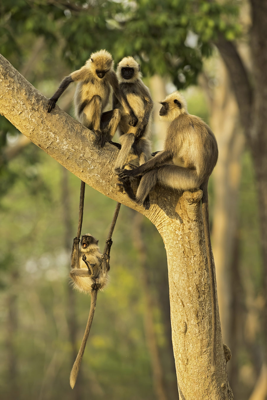 Fun for all ages, © Thomas Vijayan, Oakville, Canada, Highly Honored Wildlife, Nature's Best Photography Asia