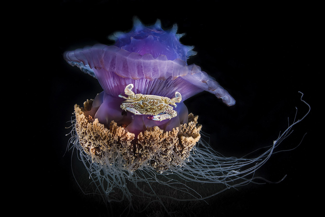 Underwater spaceship, © Vania Kam, Hong Kong, Highly Honored Ocean, Nature's Best Photography Asia