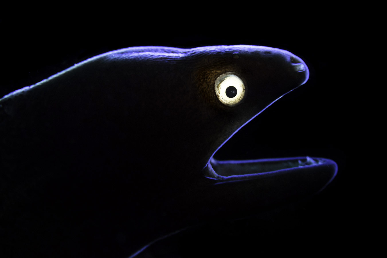 Eel, © Liang Fu, Beijing, China, Highly Honored Ocean, Nature's Best Photography Asia
