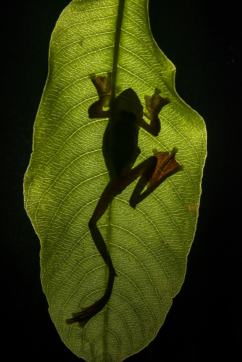 Backlight, © Vinod (Baiju) Patil, Aurangabad, India, Highly Honored Small World, Nature's Best Photography Asia