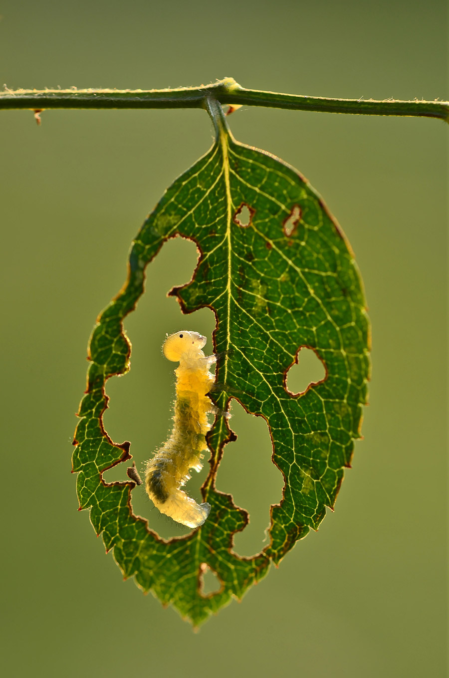 Caterpillar's idea, © Minghui Yuan, Wuhan, China, Highly Honored Small World, Nature's Best Photography Asia