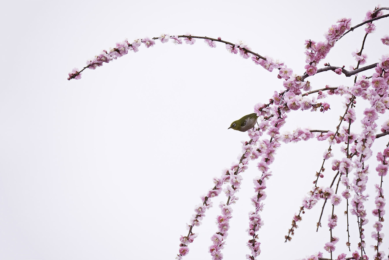 Pink time, © Yoshimasa Sugitate, Shiga, Japan, Highly Honored Birds, Nature's Best Photography Asia