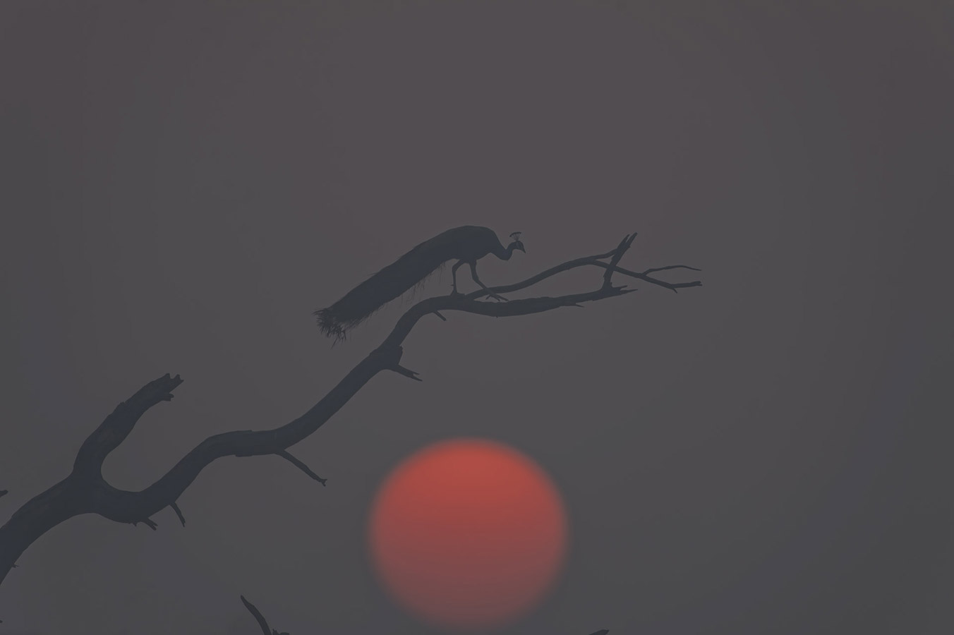 Morning mist, © Vinod (Baiju) Patil, Aurangabad, India, Highly Honored Birds, Nature's Best Photography Asia