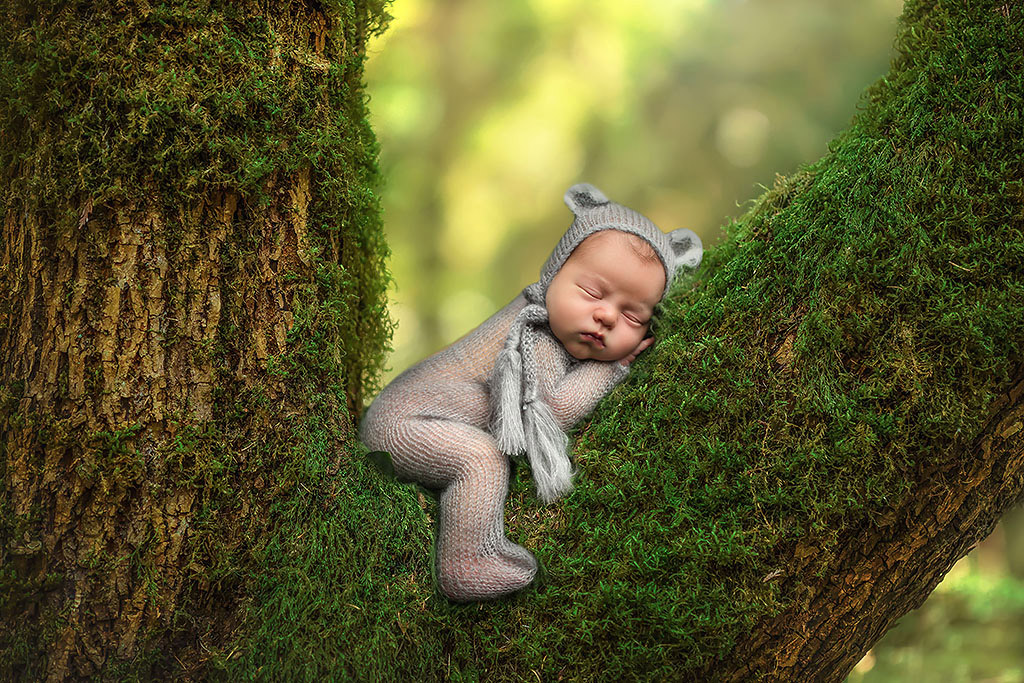 Bear in a tree, © Lindsay Walden, USA, Newborns Photo Contest