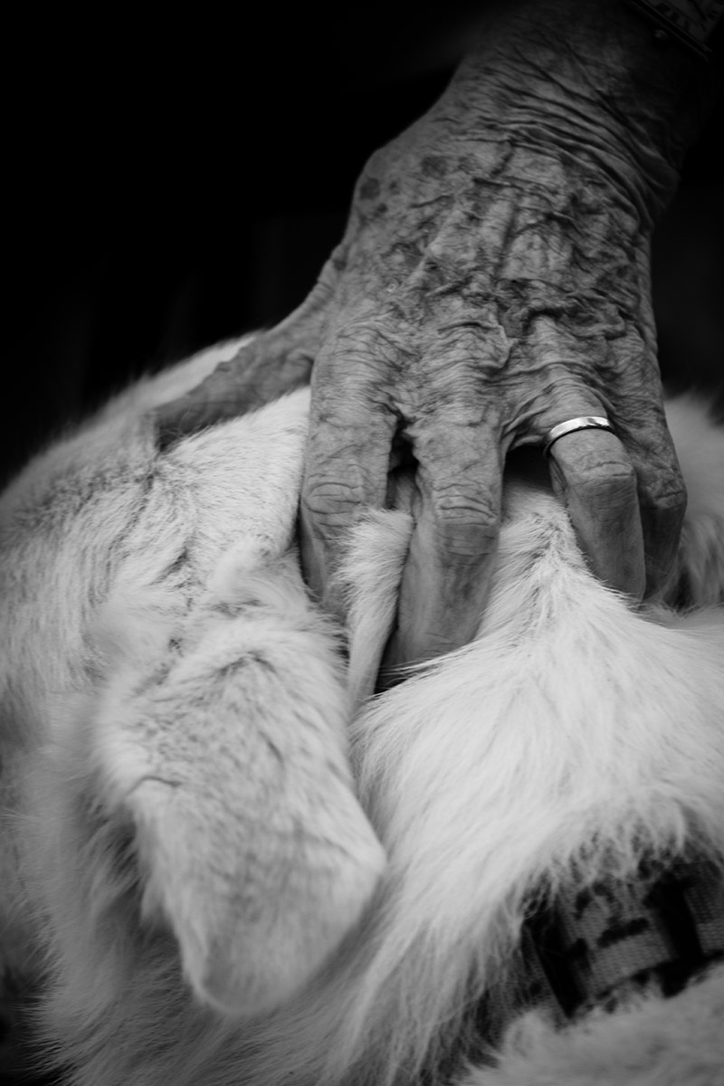 Eternal Fidelity, © Luca Saveri, 3rd Prize, Nikon Photo Contest