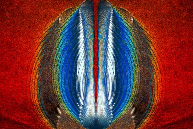 Plastic fracturing on credit card hologram, © Steven Simon, Simon Photography, Grand Prairie, Texas, USA, 11TH PLACE, Nikon's Small World — Photomicrography Competition