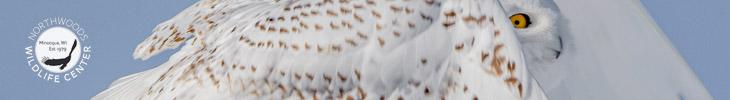 Northwoods Wildlife Center Photo Contest