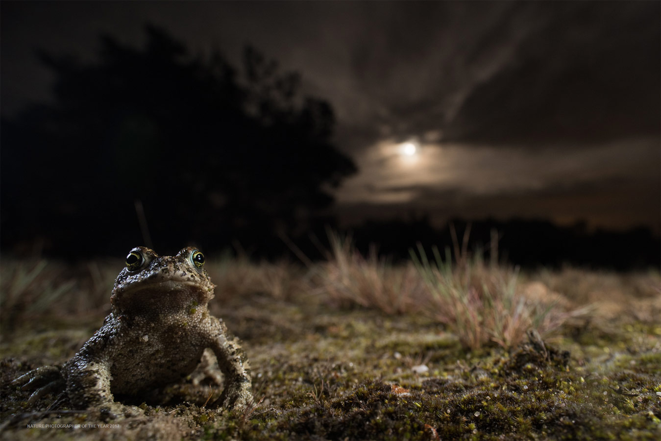 Under the Moon, © Paul van Hoof, Winner by Category C3 - Other animals, Nature Photographer of the Year