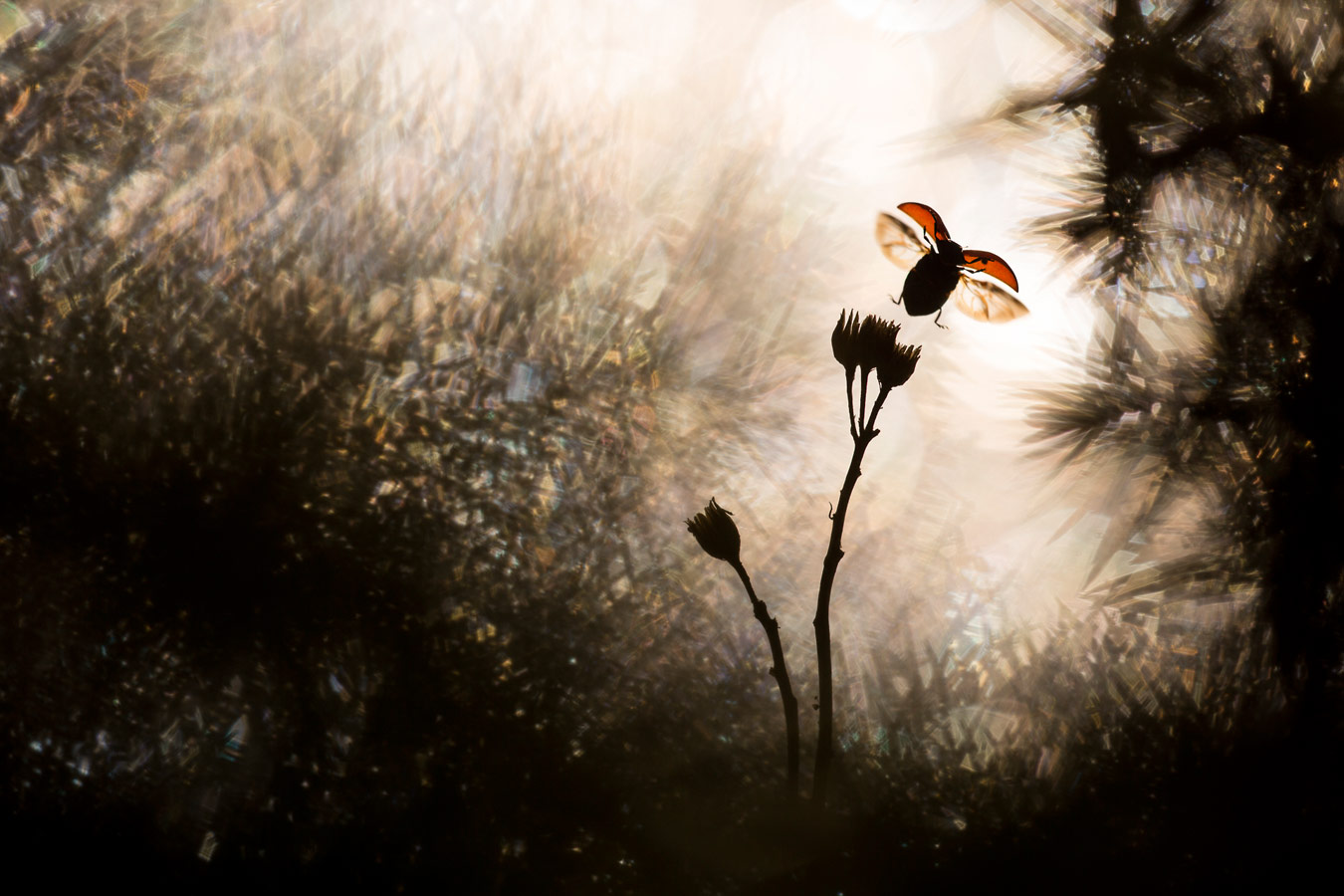 Flight, © Bastien Riu (France), Nature Photographer of the Year