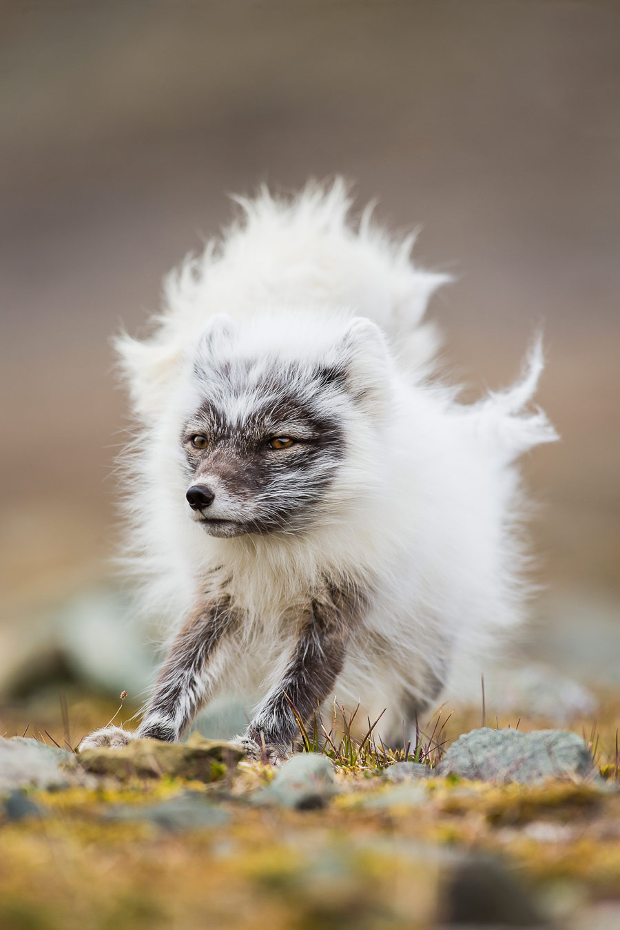 Bad hair day, © Kevin Morgans (UK), Runner-up, Nature Photographer of the Year