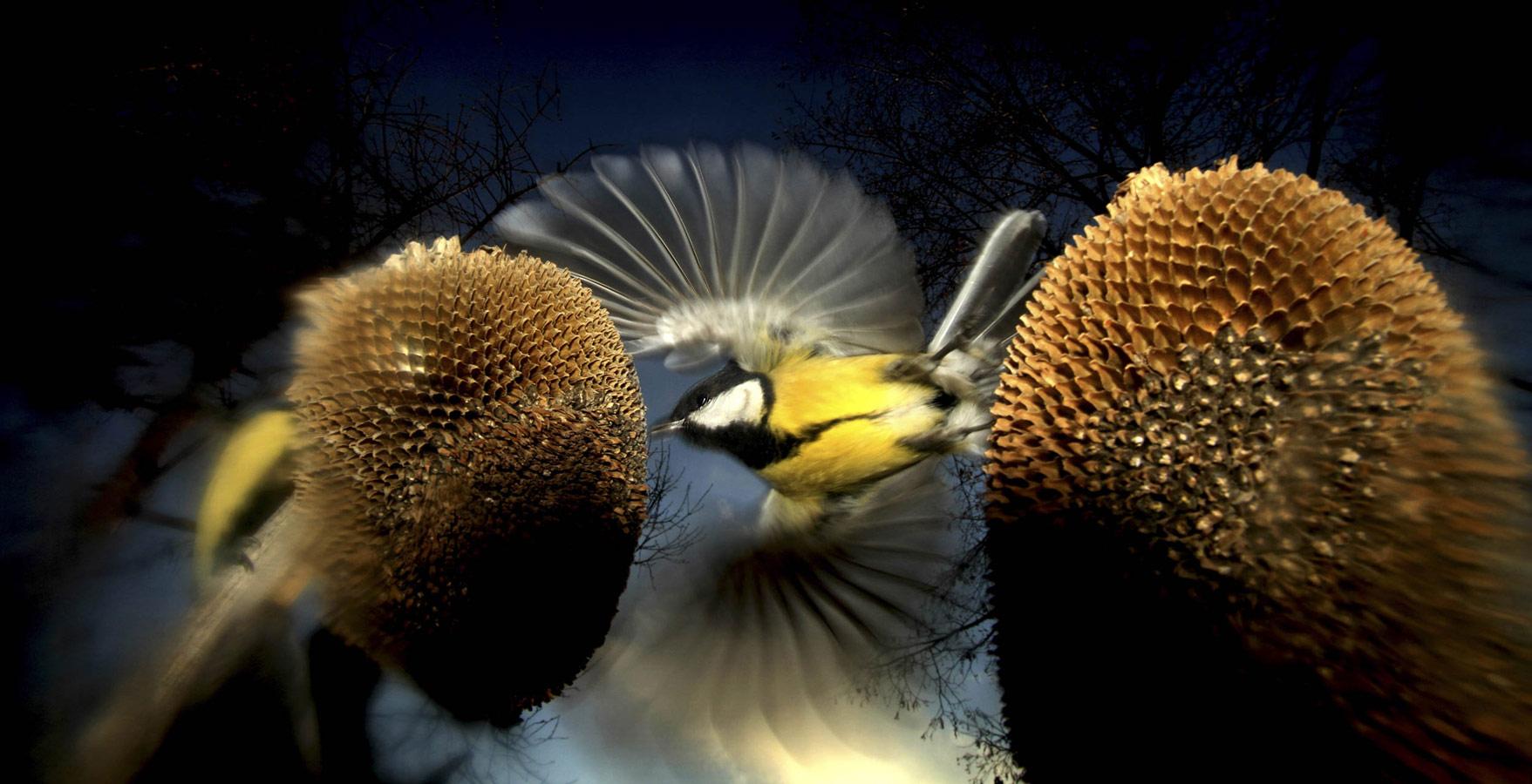 © Ritzel Zoltán, Birds & Bats Award, Oasis Photo Contest — International Award of Wildlife Photography