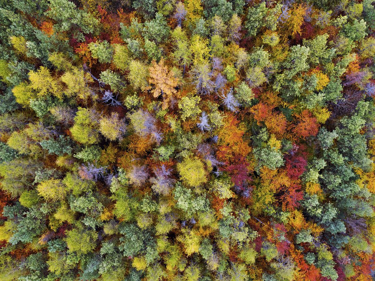 © Stephan Fürnrohr, Plant world Winner, Oasis Photo Contest — International Award of Wildlife Photography