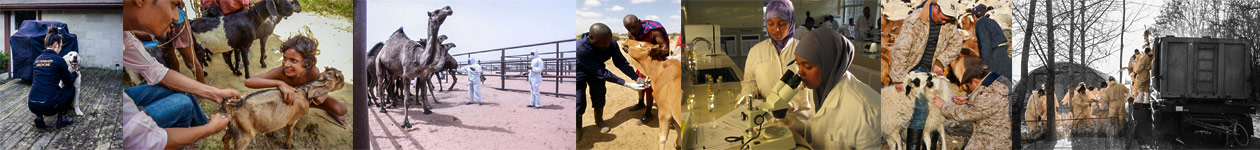 Animal health and welfare, beyond the cliché Photo Competition by OIE