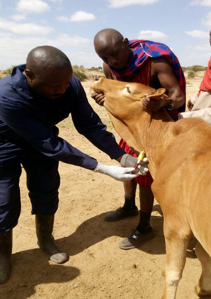 Animal Disease Surveillance-Our team undertaking Active surveillance, © Dr. Nazaria Wanja Nyaga, Africa Region 2018 Winner, Animal health and welfare, beyond the cliché Photo Competition by OIE