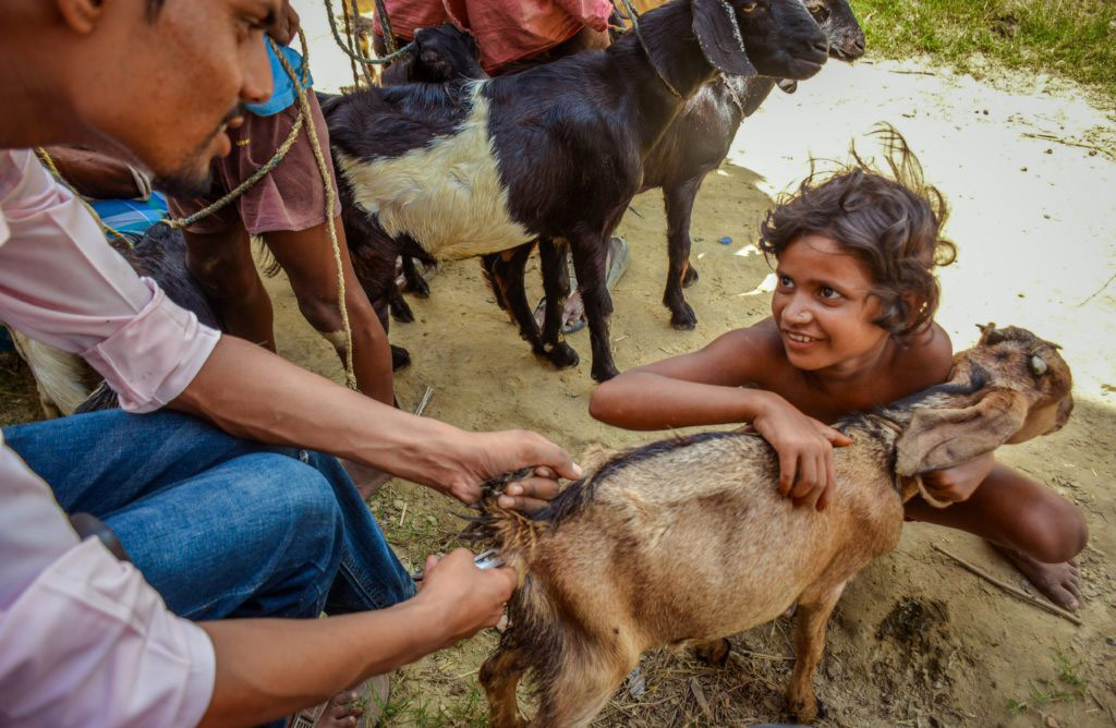 Hopeful little eyes expecting a correct diagnosis and treatment for her goat from a veterinarian during a health camp in a remote village, © Bhuwan Giri, Asia & Pacific 2018 Winner, Animal health and welfare, beyond the cliché Photo Competition by OIE