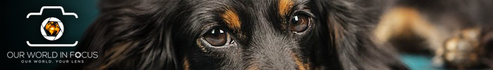 Your Favorite Pet Photo Contest - Our World In Focus