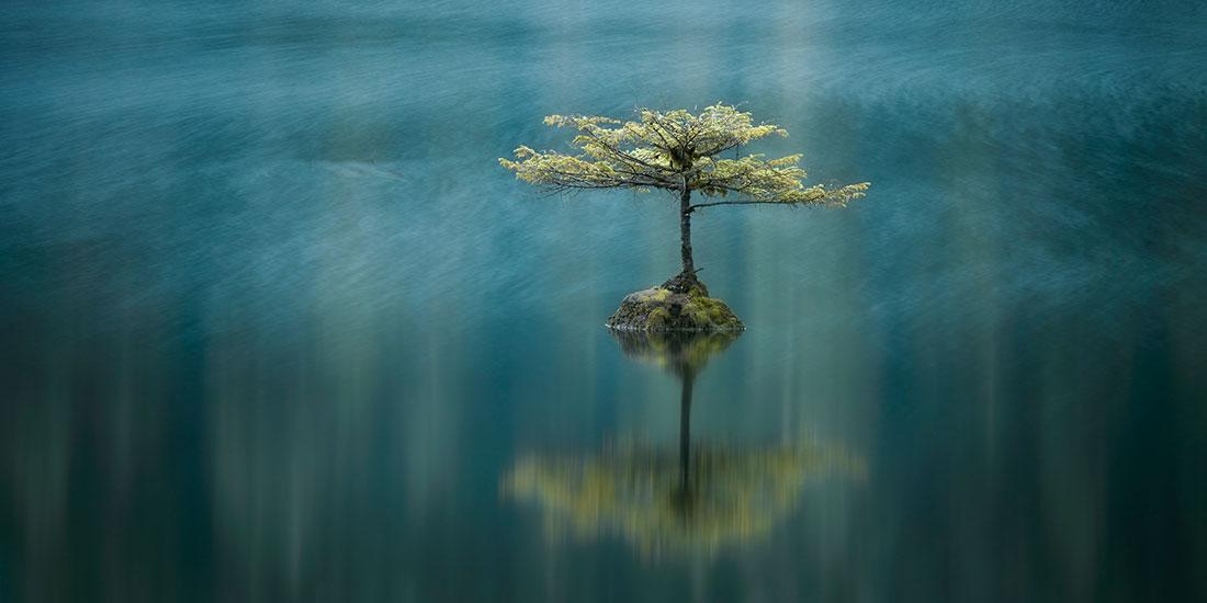 Temperate Breeze, Fairy Lake, Port Renfrew, Vancouver Island, British Columbia, Canada, © Adam Gibbs, Canada, 2017 Carolyn Mitchum Award Winner 3rd Place, EPSON International Pano Awards