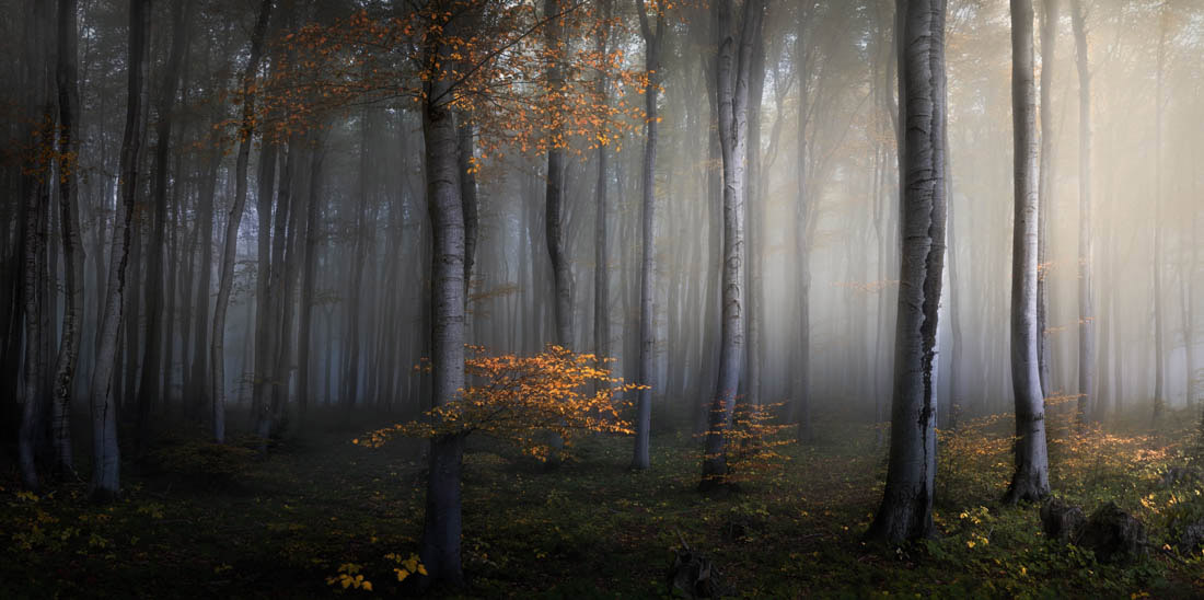 Season of Gold, Balkan Mountains, Bulgaria, © Veselin Atanasov, Open Photographer of the Year, EPSON International Pano Awards