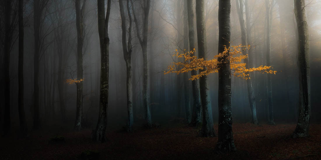 Mystical Forest, National Park, Central Balkan, Bulgaria, © Veselin Atanasov, Open Photographer of the Year, EPSON International Pano Awards