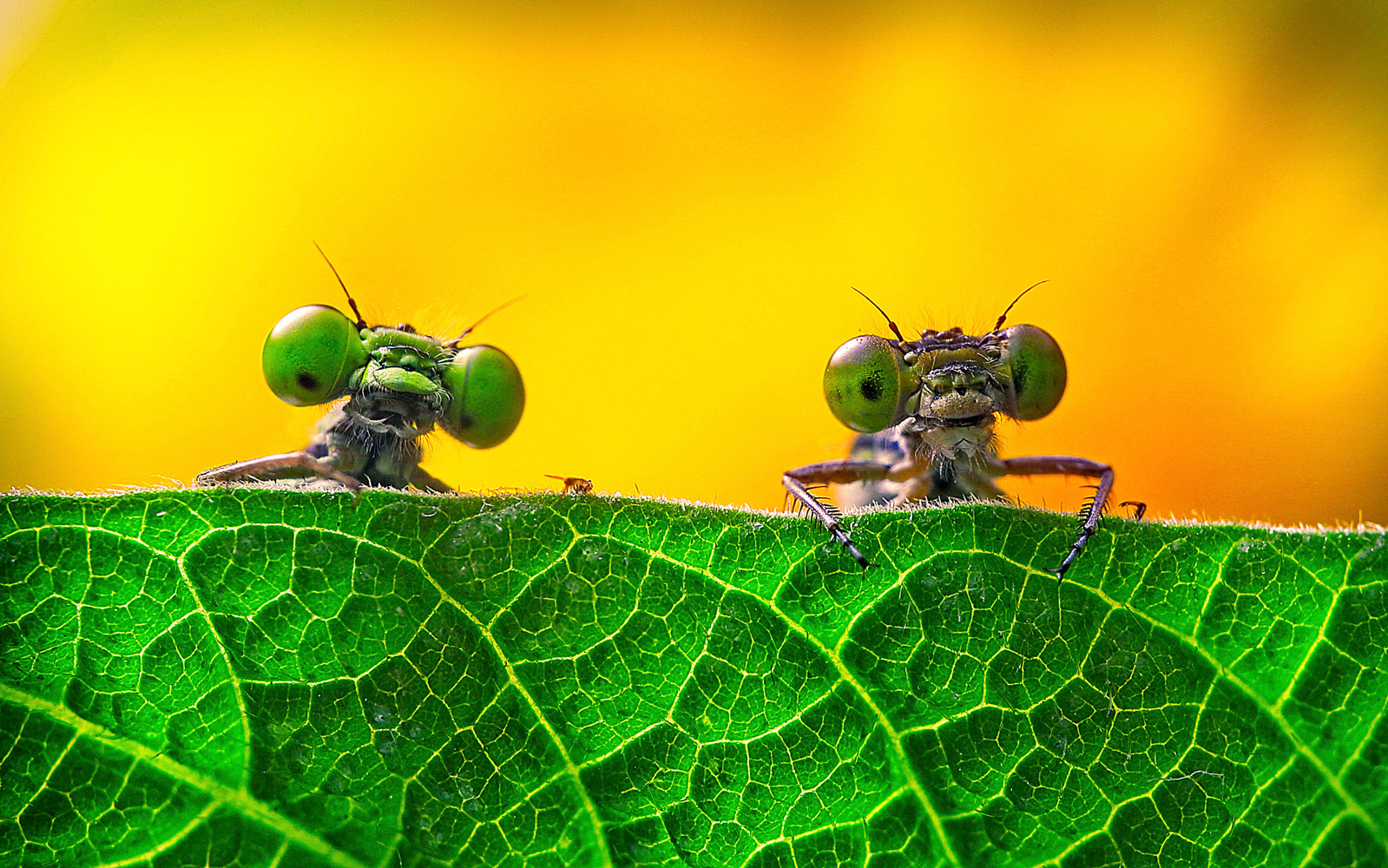 Two big eyes, © Miao Yong, The Royal Society of Biology annual photography competition